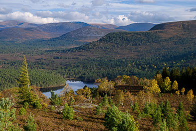 Aviemore, Rothiemurchus & the Northern Cairngorms