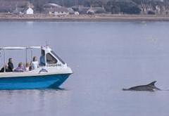 Avoch Dolphin Trips