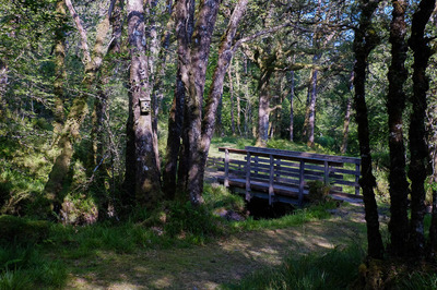 Barnaline Oakwoods And Avich Falls Near Dalavich