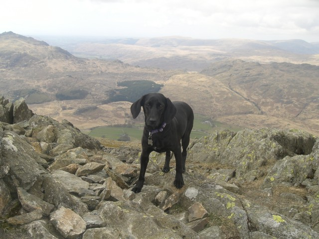 30 Another cairn top on Grey Friar.JPG