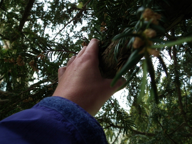 7 Touching the Yew Tree (640x480).jpg
