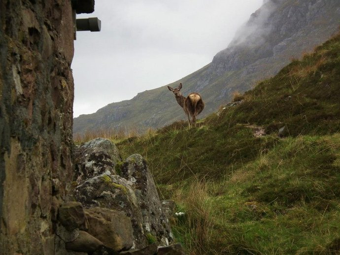 1 Deer at Shenavall Bothy 2.jpg
