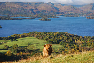 Drymen and Balmaha - South and East Loch Lomond