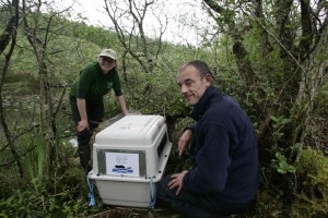 Beaver being released by Simon Jones and Jenny Holden of Scottish Beaver Trial