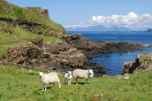 Mull is one of the areas proposed