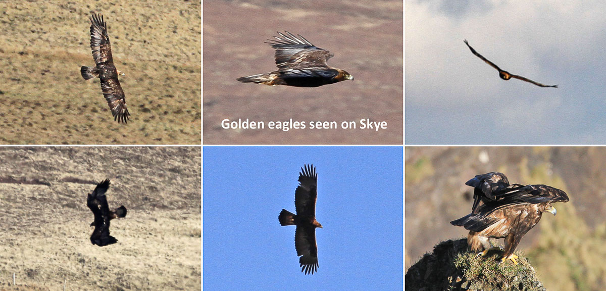 The relationship between the sea eagle and vultures