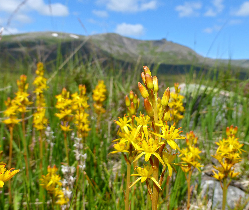 A Guide To Scottish Heathers Walkhighlands