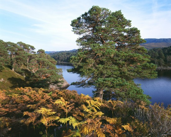 Loch Affric (Photo: Trees for Life)