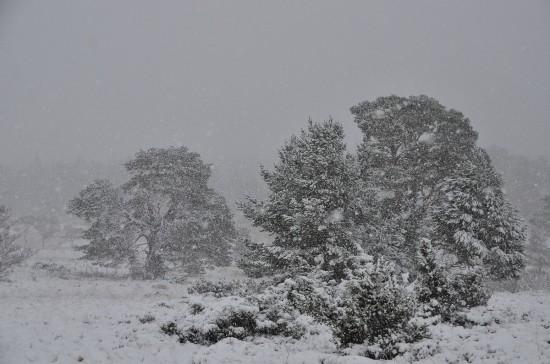 Winter in Rothiemurchus forest