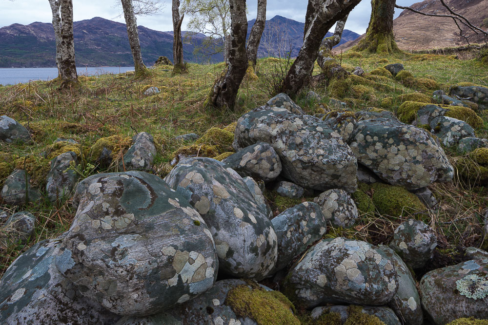 Lichens and boulders, Loch Hourn, Knoydart This study of boulders and lichens captures their relationship with the other elements of the landscape and is characteristically the habitat of a willow warbler.