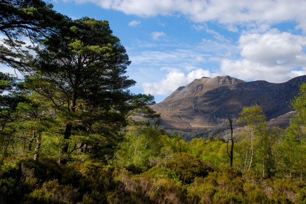 Pinewoods at the Beinn Eighe NNR