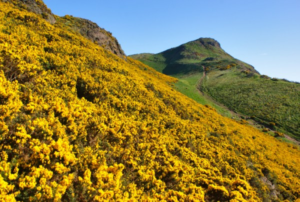 Arthur's Seat in its gaudy spring garb