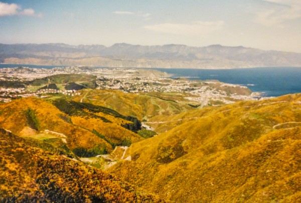 An old 35mm photo I took in Wellington, NZ.  It's a bit grainy but you can clearly see just how big a problem gorse is there.