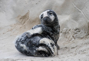 FEATURE: Surprised by a seal pup
