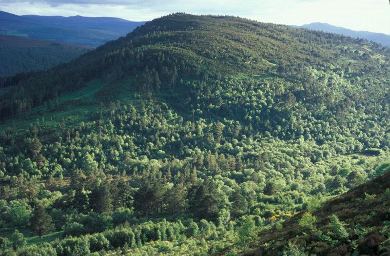 Ledmore & Migdale Woods (Photo: Woodland Trust)