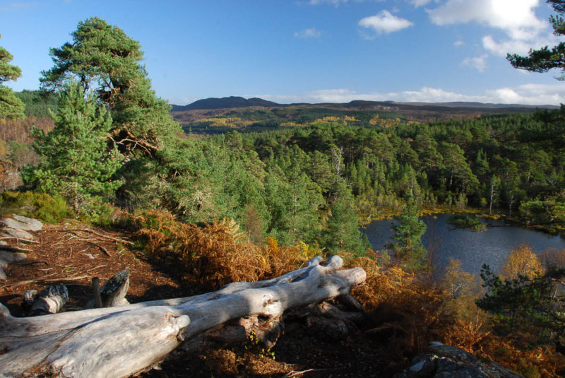 Coire Loch, Glen Affric - waymarked by the Forestry Commission