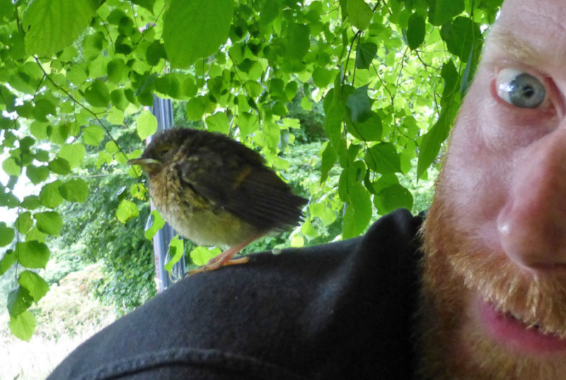 Fledgling birds are often yet to develop any sense of fear of humans. In fact they're so friendly they'll even leave tiny presents on your shoulder.