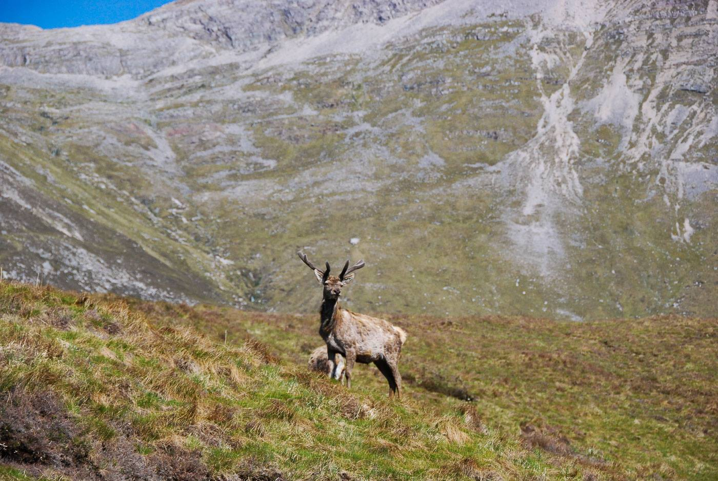 Walkers urged to check for deer stalking before Heading for the
