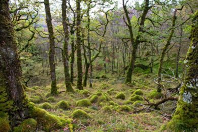 FEATURE: Exploring the Celtic Rainforest