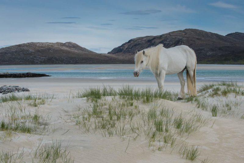 Karen Thorburn Blog 002-6 Eriskay Pony, Luskentyre
